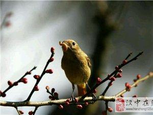 清晨的鸟儿