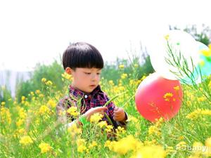 """2016汉中""""油菜花宝宝""""评选活动即将开始"""