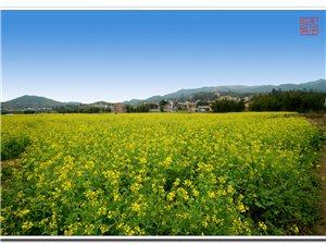 【天平长城】走进广东最美的乡村