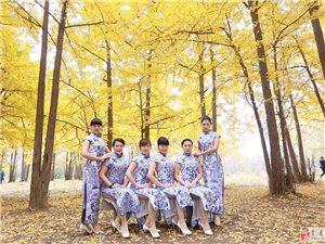 2015年深秋,银杏林,剪影一组