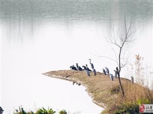 大美汉寿(14)湿地鹤故乡