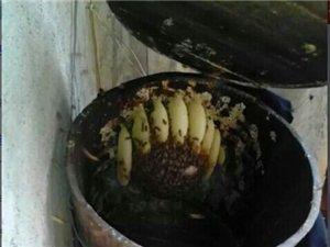 斗宴电站深山蜂蜜