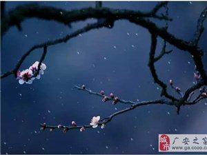 一树花香一树暖