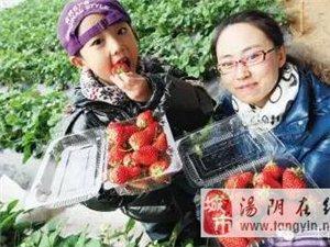 新濠天地赌博网址春季草莓采摘攻略,约起来吧!