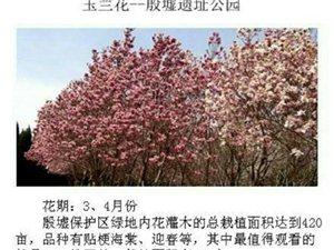 三月的安阳是个赏花的好季节,我们约起来吧
