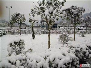 三月,我们赏花又赏雪!美惨了!!