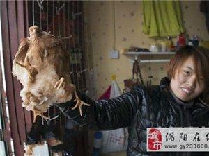 """山东菏泽现""""四腿鸡"""" 专家称不影响食用"""