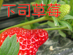 下司草莓成熟了,咱��一起去采摘草莓吧!�s快�竺�加入我��!