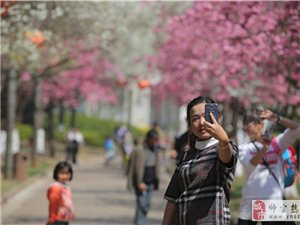 心灵浅唱:等你,在三月的樱花里