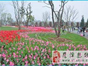 龙虎山花语世界正式开园