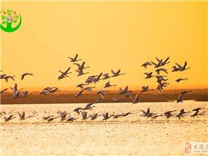 3月热闹非凡的大港湿地