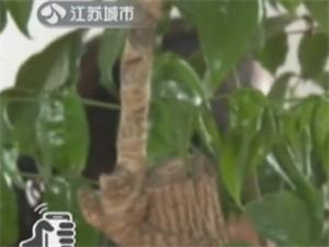 """微信邂逅""""�o委干部"""" 淮安名一女性遭�_��_色!不正���P系!"""