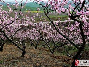 丹江口在线摄影俱乐部部分摄影爱好者到老河口桃花浔摄影创作