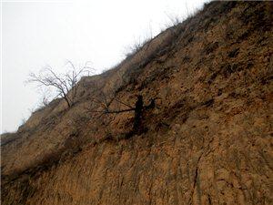 合阳西沟一男子闲浪落下悬崖,民警抛绳救助