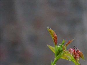 雨中�p花