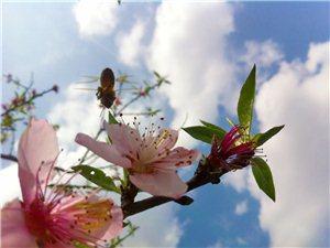 手�C拍�z:野蜂�w舞