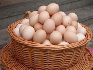 新鲜的鸡蛋