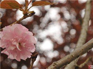 """月初黄岗山附近""""探""""花"""