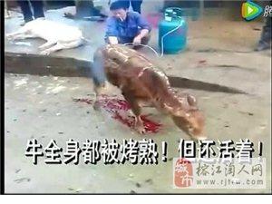 【视频】灭绝人性的事又来了,喷枪烤活牛 ,还是黔东南人干的