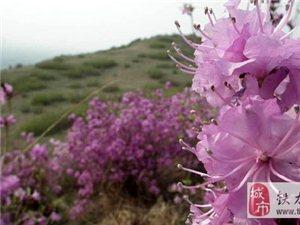 【美文欣赏】四月春风来 满山映山红