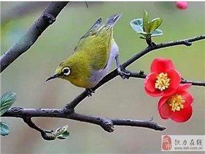 【美文欣赏】春天的唐诗,该有多美!