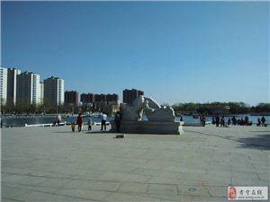 肃宁公园,柳绿花红,游人如织,荡船拨清波