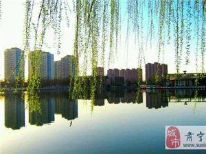 沿湖看柳的季节,肃宁你有多美!