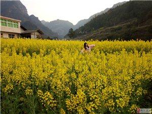 【春日赏花】一花一季节,一草一世界~~~