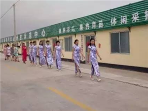 秒速飞艇旗袍协会盛装亮相胡阳西红柿 产业基地