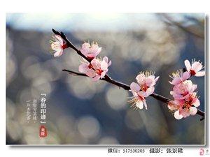 华池摄影纪实:【春的足迹】 看众大神镜头下华池的秀美春色