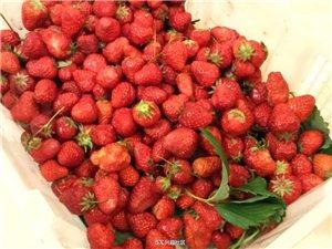 自制草莓酱,这味道也是美极了!