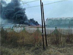 西黄旗工厂化育苗基地大棚失火