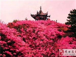 四月麻城龟峰山深度赏花、许世友故里自驾二日游