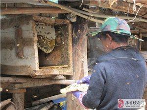天然成熟蜂蜜的保质期到底有多久?