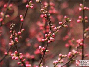 春色――一点梅