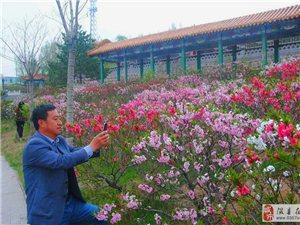 隰县森林公园桃花朵朵开