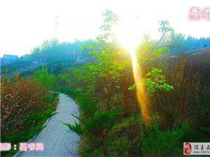 我的家乡在隰州――隰县森林公园百花绽放