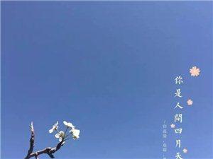 满园春色关不住,杨柳依依赏春来——西洞桃花节
