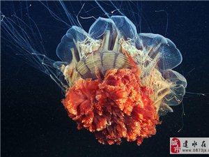 惊艳!你从未见过的深海水母