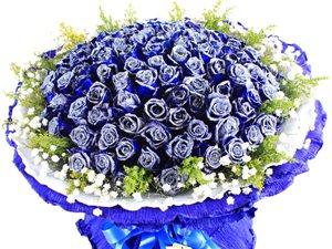 99枝蓝色玫瑰花束(非节假日出售,详情请到店咨询)