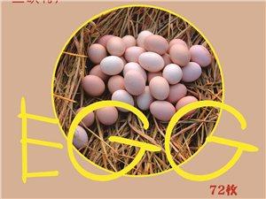 兰妹子土鸡蛋72枚