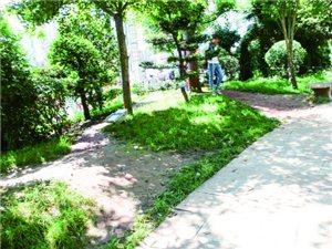 """红果胜境广场多处绿化带被抄近路的人们踏成了""""小路"""""""