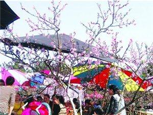 遂宁市首届乡村旅游节暨射洪县第十八届桃花节3月12日开幕