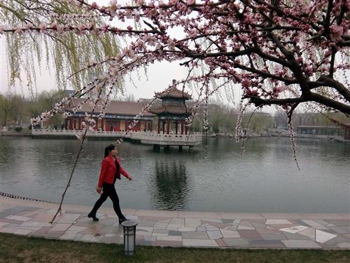 花红柳绿明媚春(图  司建平)