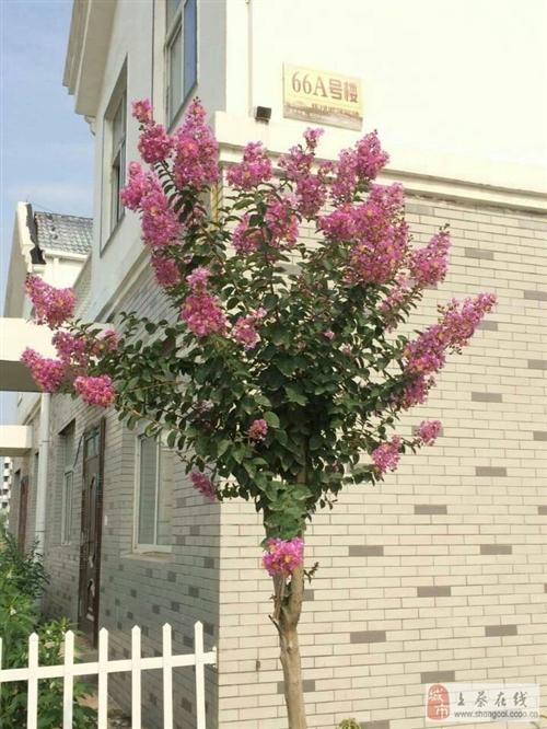 花儿姹紫嫣红