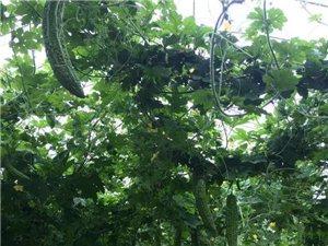 现代农业观光采摘园−−开园采摘啦