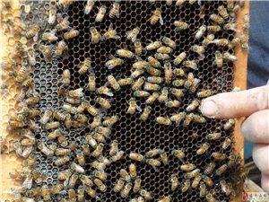 卖纯蜂蜜,现打现卖,绝对纯正