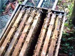 出售荔枝蜂蜜纯天然食品