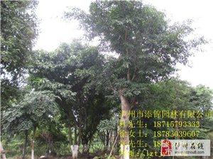 瀘州香樟樹、瀘州紫薇樁、瀘州黃葛樹、瀘州小葉榕