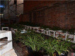 批發:紫砂盆、蘭花、蘭花植料、園藝工具等